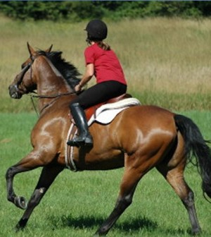 Eperience The Fun Of Riding Horse This Summer Season